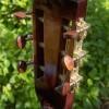 http://www.albedoguitars.com/guitare-folk-et-basse-folk/guitare-parlor-type-martin-1/